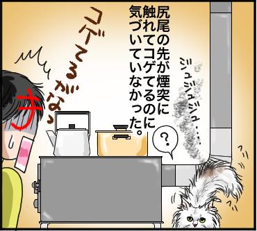 ネコのしっぽ4
