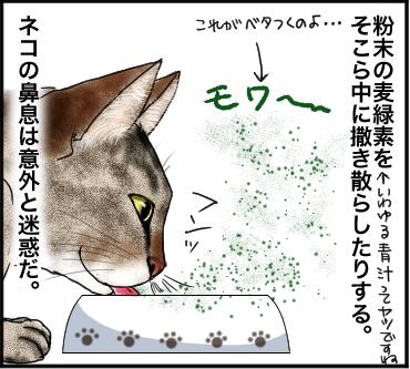 ネコの鼻息4