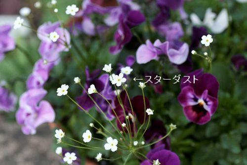 _MG_5189.jpg