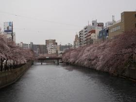 2016桜まつり1 (1)