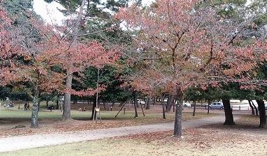 奈良公園20151103