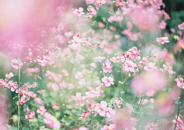 こんなに沢山咲いているのみたの初めて~♪