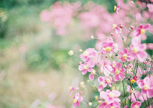 この秋、恋した花