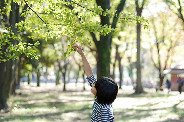 う~ん、木が~。