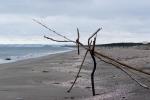 海辺の一枚