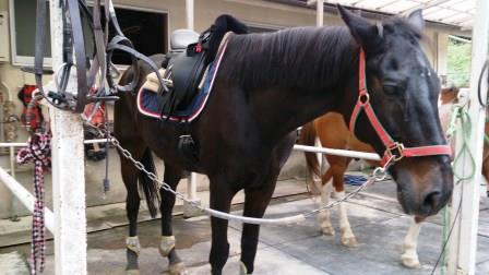 トリトンと馬場鞍