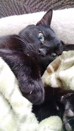 毛布とミータ