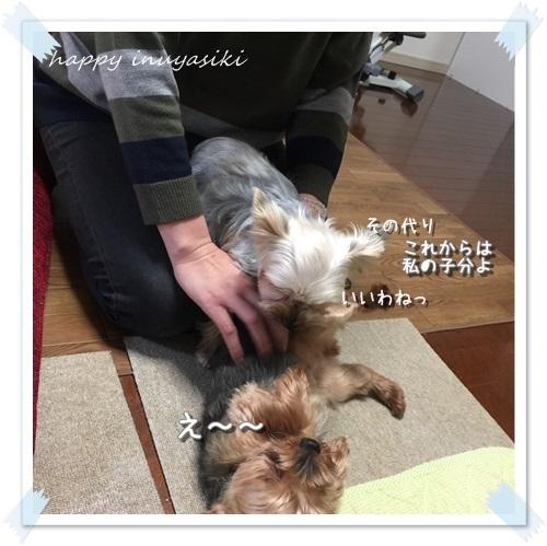 mini16IMG_1658-20160320.jpg