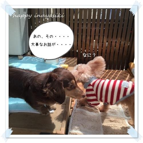 mini16IMG_1708-20160321.jpg