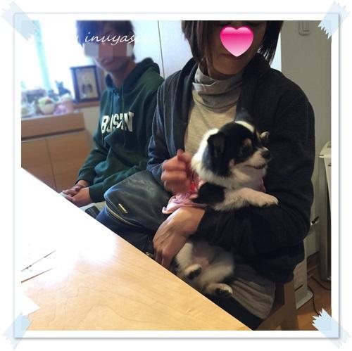 mini16IMG_1800-20160323.jpg