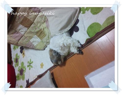 mini16IMG_2293-20160331.jpg