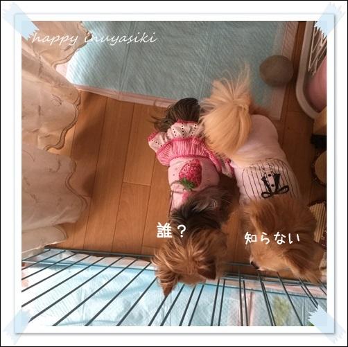 mini16IMG_2559-20160402.jpg