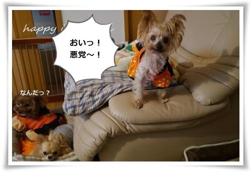 mini3P1480881.jpg