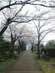 青山霊園3
