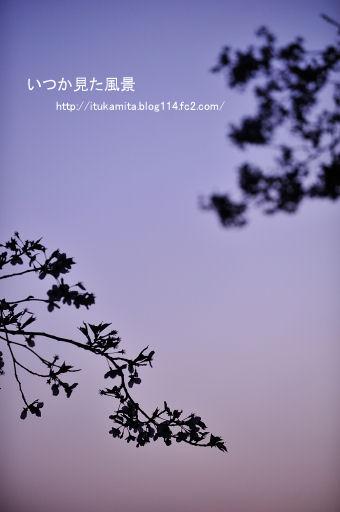 DS7_0963ri-ss.jpg