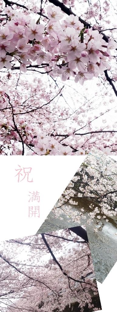 sakurawalking.jpg