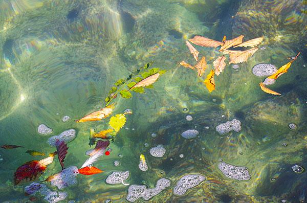 山田湾大島に漂う落ち葉