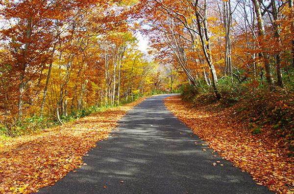 早池峰林道の紅葉