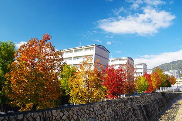 六甲山麓の紅葉