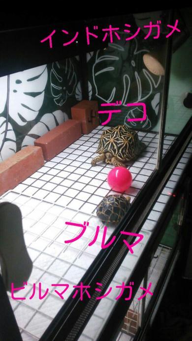 rakugaki_20151201092012704_convert_20151201094853.jpg