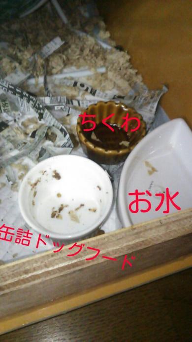 rakugaki_20151210084705798_convert_20151210095352.jpg