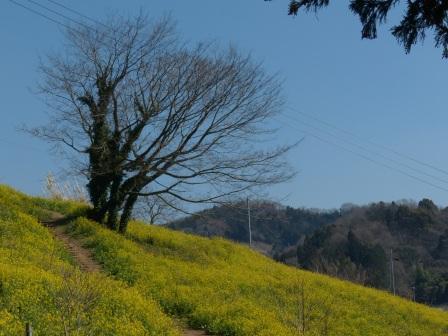 犬寄峠の黄色い丘 2