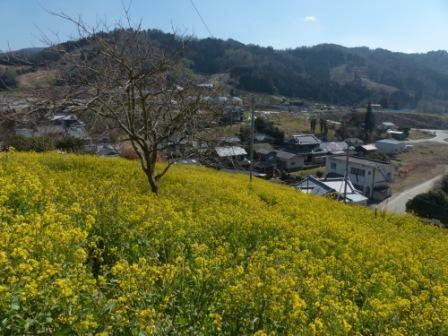 犬寄峠の黄色い丘 3
