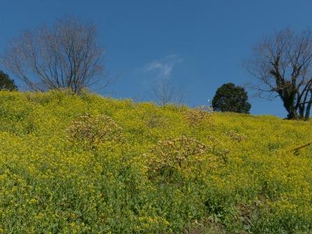 犬寄峠の黄色い丘 9