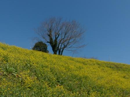 犬寄峠の黄色い丘 8
