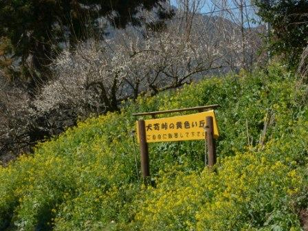 犬寄峠の黄色い丘 1