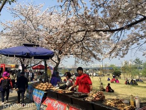 漢江公園_桜_2016年4月 (1)