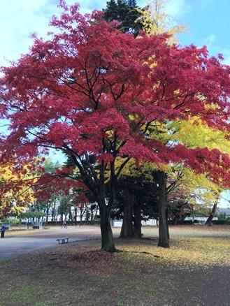 木ノ下公園紅葉