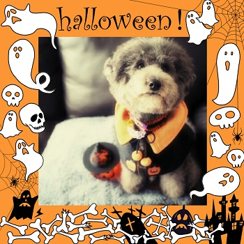 Happy Halloween2015