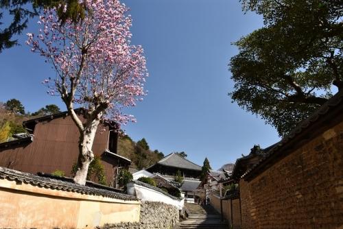 裏参道の春