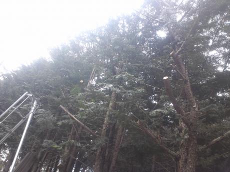 山梨県北杜市小淵沢町 伐採2