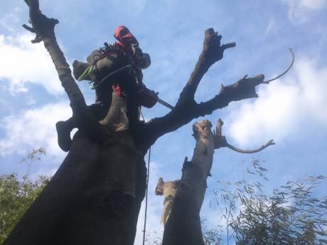 茅野市 枝の剪定3