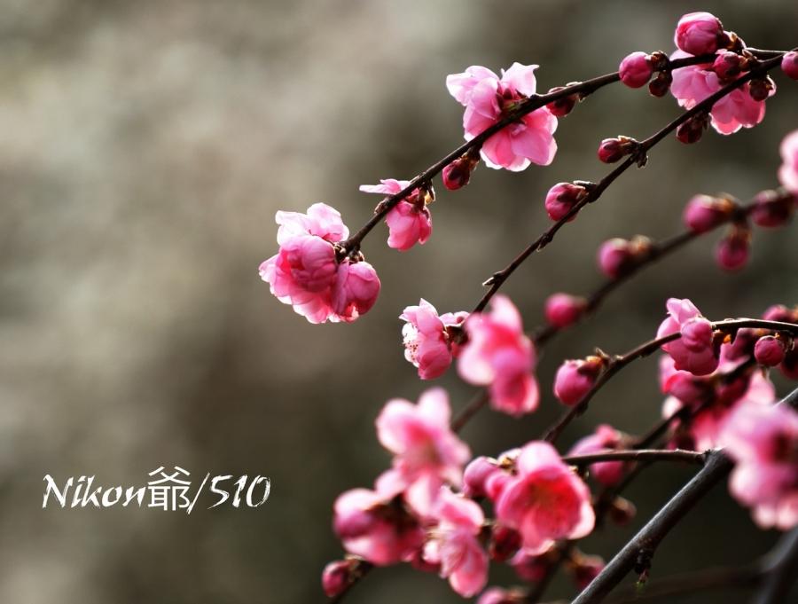 花もも2s