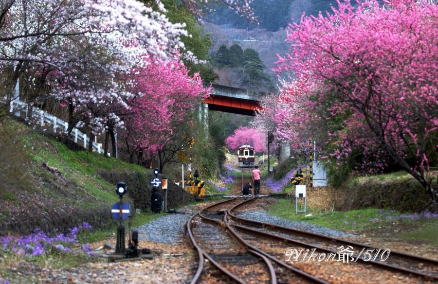 鉄道撮影し隊sn