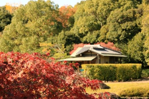 2015 白鳥庭園 紅葉 昼 02
