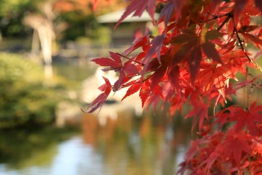 2015 白鳥庭園 紅葉 昼 08