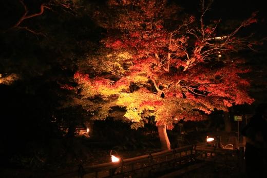 2015 白鳥庭園 紅葉 夜 03