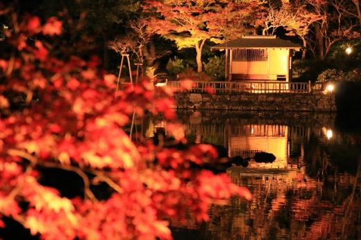 2015 白鳥庭園 紅葉 夜 01
