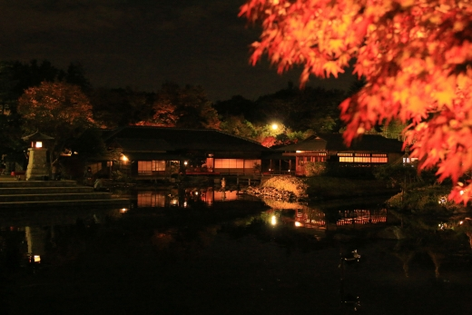 2015 白鳥庭園 紅葉 夜 02