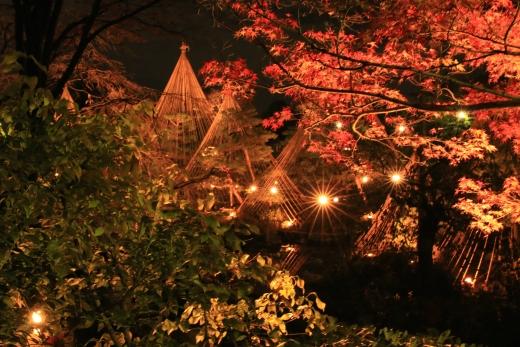 2015 白鳥庭園 紅葉 夜 06