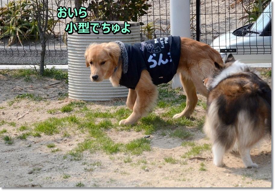 DSC_0105らん小型犬