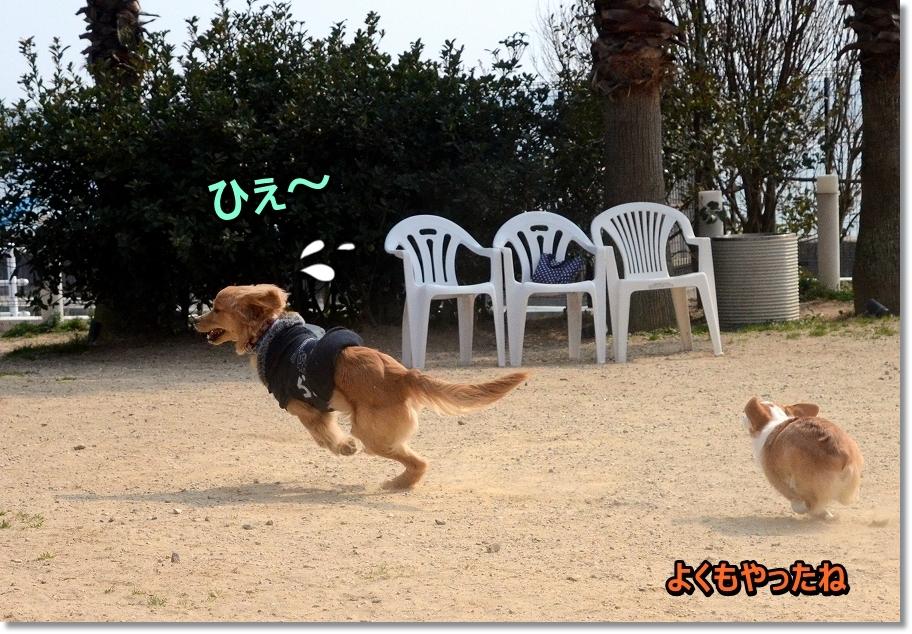DSC_0119わ~