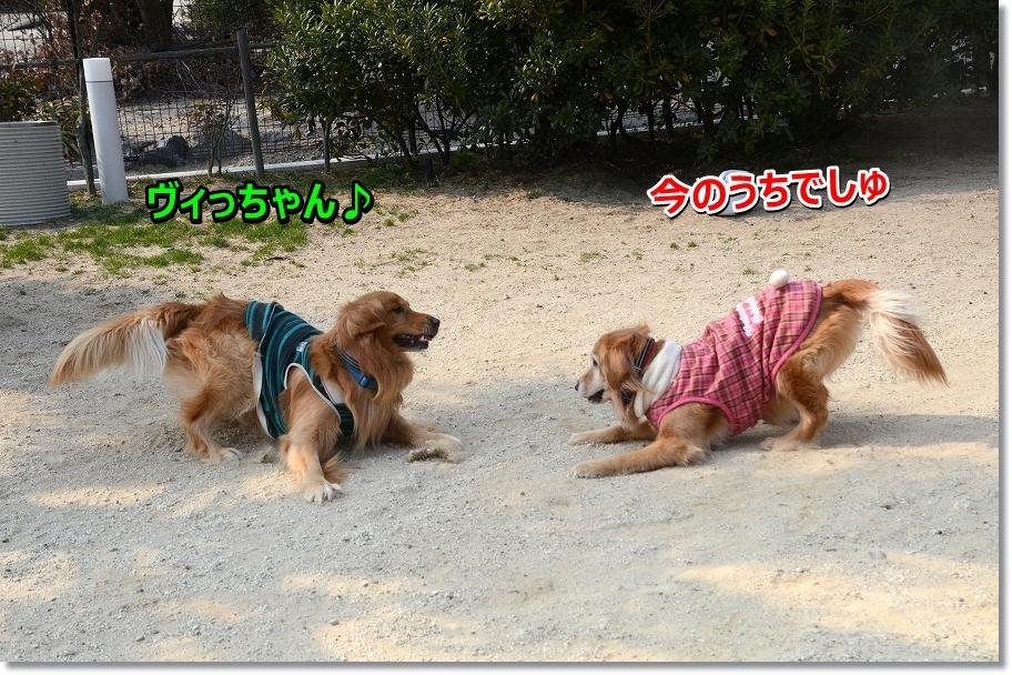 DSC_0138ヴィっちゃん