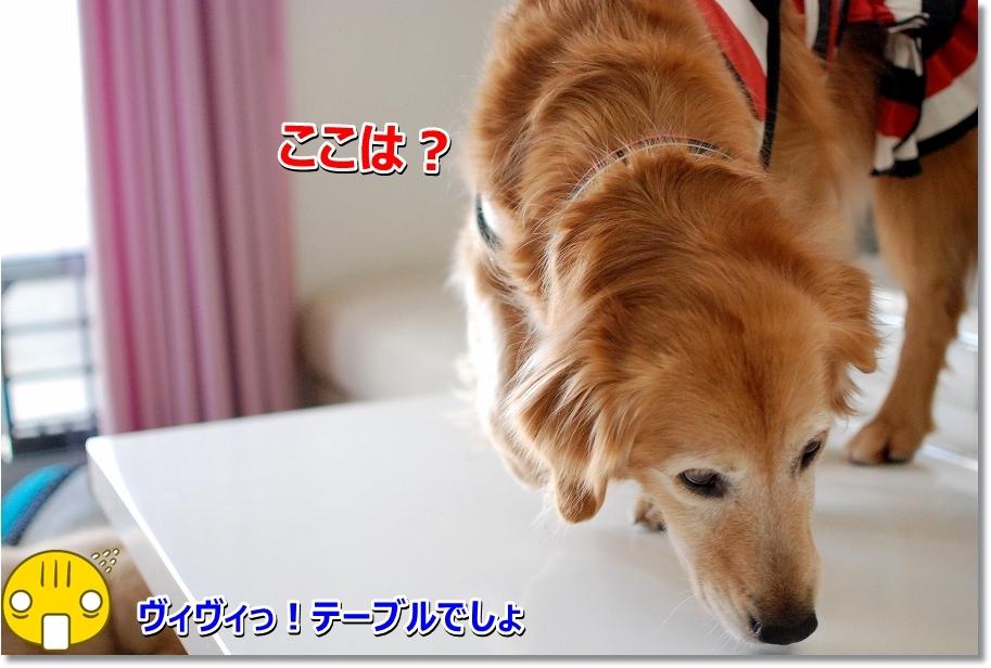 DSC_0098_20160317192607e9d.jpg