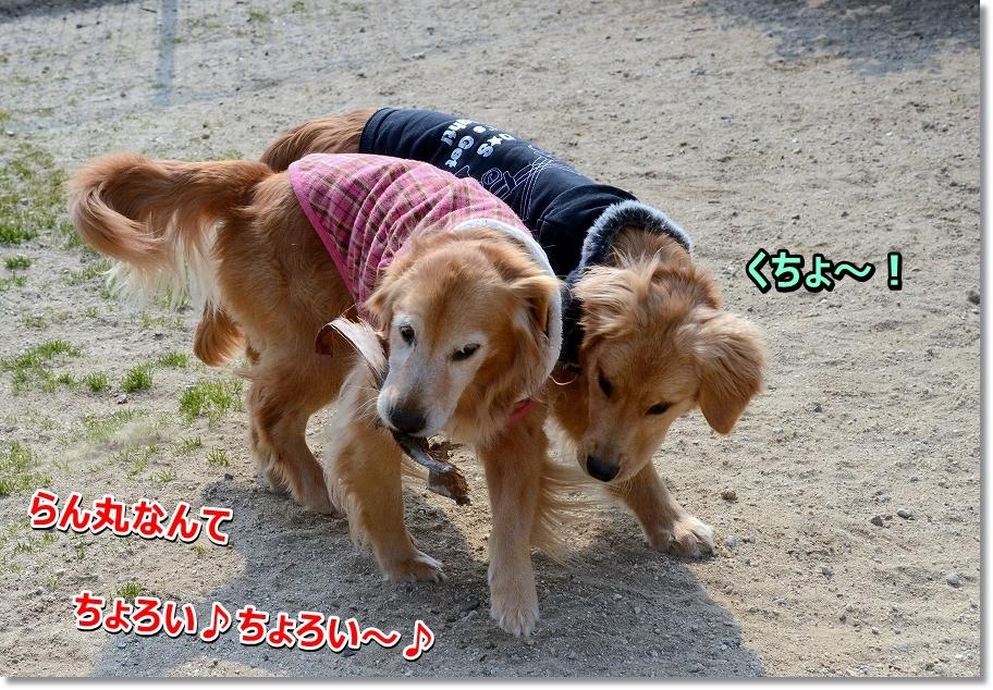 DSC_0200tyoroimon.jpg