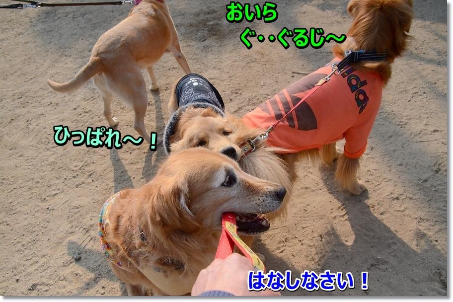 DSC_0550_20160323001845b5f.jpg